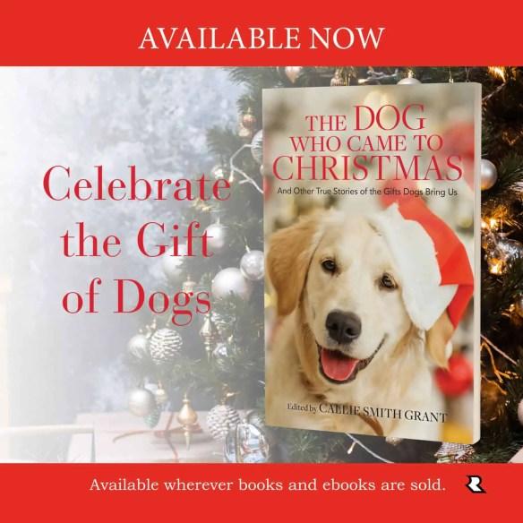 the dog who came to christmas