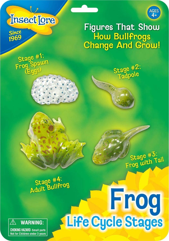 Funschool Frogs