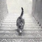 Is The Cat Going Up The Stairs Or Down The Stairs?  Let The Debate Commence!