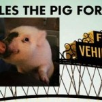 Giggles The Pig Runs For Mayor