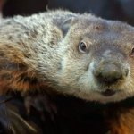Uh-Oh, Punxsutawney Phil Sees His Shadow, So We Face Six More Weeks Of Winter