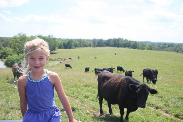 A little girl overlooks a herd of cattle