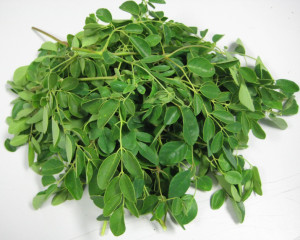Pile_our_Moringa_leaves_1_2009