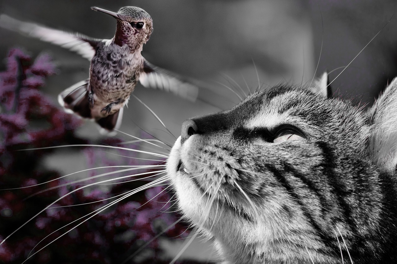 Cat Preying on Hummingbird
