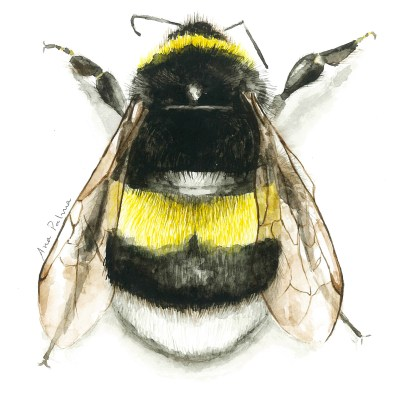 Bee | Watercolour on paper