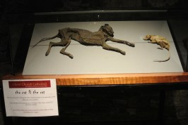 Mummified cat and rat