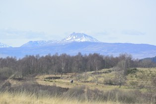 Ben Lomond view