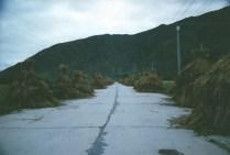 Village haystacks