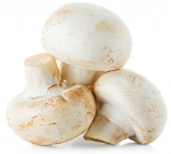 white button mushrooms and testosterone levels