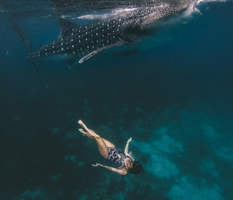 whale sharks oslob cebu