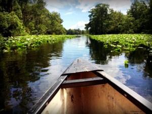 Canoeing the Wekiva River