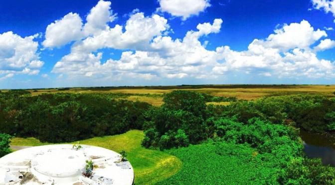 Everglades Trip