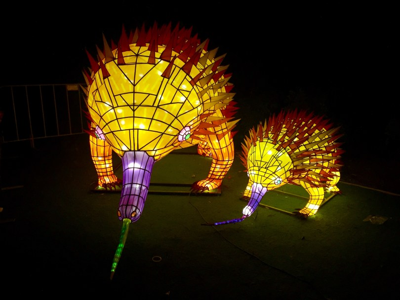 Vivid Sydney Taronga Zoo Display