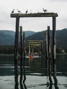 Paddling through the old dock at Ellemar-dodging bird poop