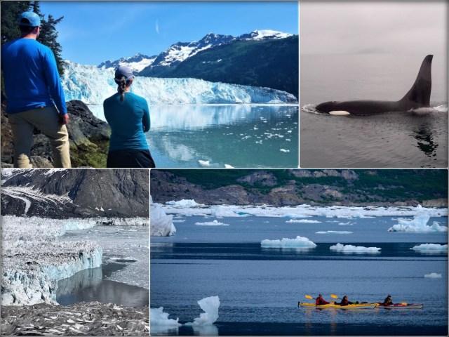 Kayak_Camp_MearesGlacier_ColumbiGlacier_Iceberg_Valdez_Wildlife_Alaska