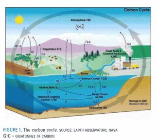 Carbon cycle NASA for Anaerobic digestion article