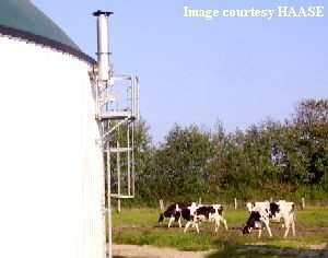 a_Haase-anaerobic digester with cows