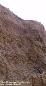 a_Silage-before-Digestion