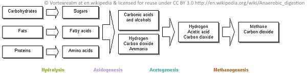 the anaerobic digestion process