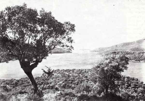 Ο πανέμορφος κόλπος της Γέρας ζωσμένος από λιόδεντρα