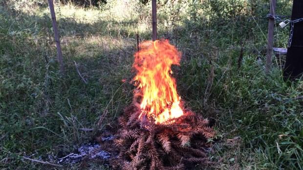 Gramado_fogo