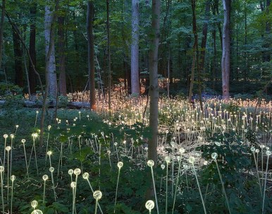 Conceptual-Light-Gardens-By-Bruce-Munro-11
