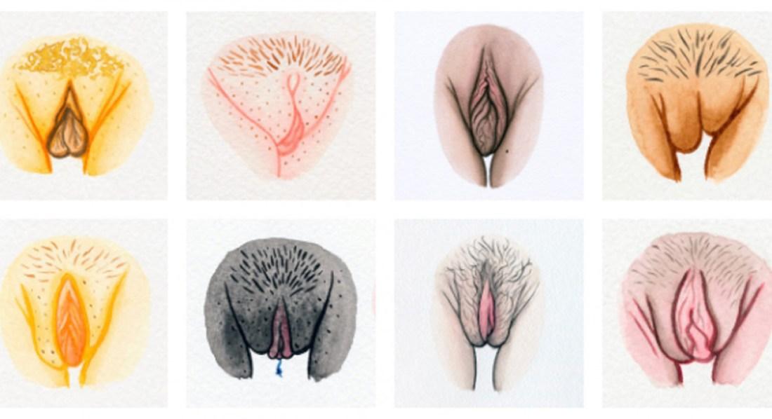 vulva-gallery-ouv2