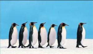 penguin_leadership_1