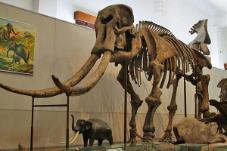 gajah purba