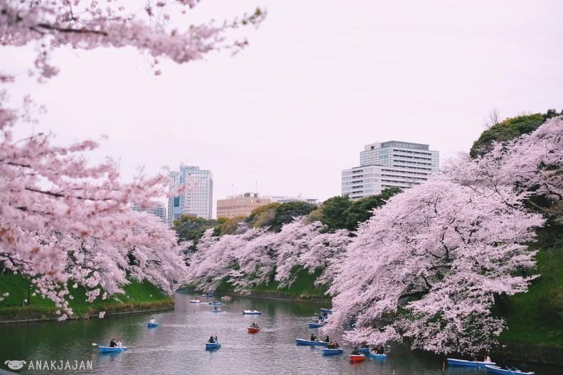 Sakura Rent A Car Torrance