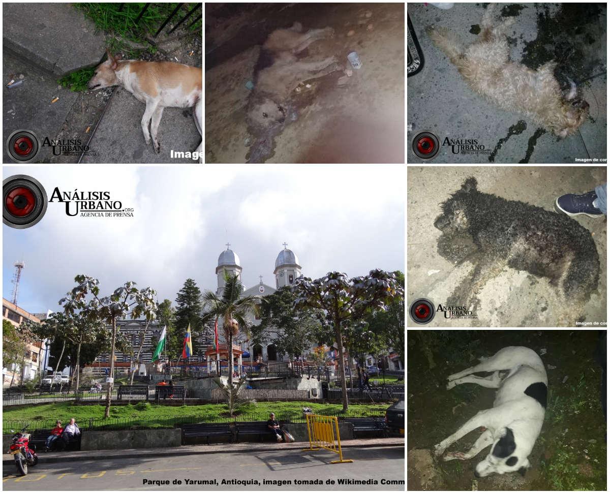 Envenenamiento masivo de perros en Yarumal