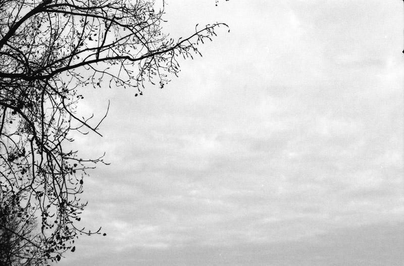 analoge kiekjes, analoge fotografie, boom, contrast, zwart-wit