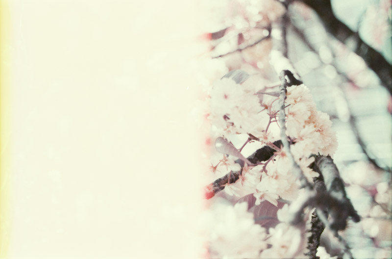 Lomochrome Purple, 35mm film photography, flowers on film