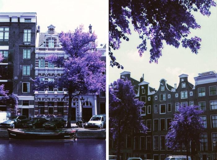 Lomochrome Purple, 35mm film photography, flowers on film, Amsterdam