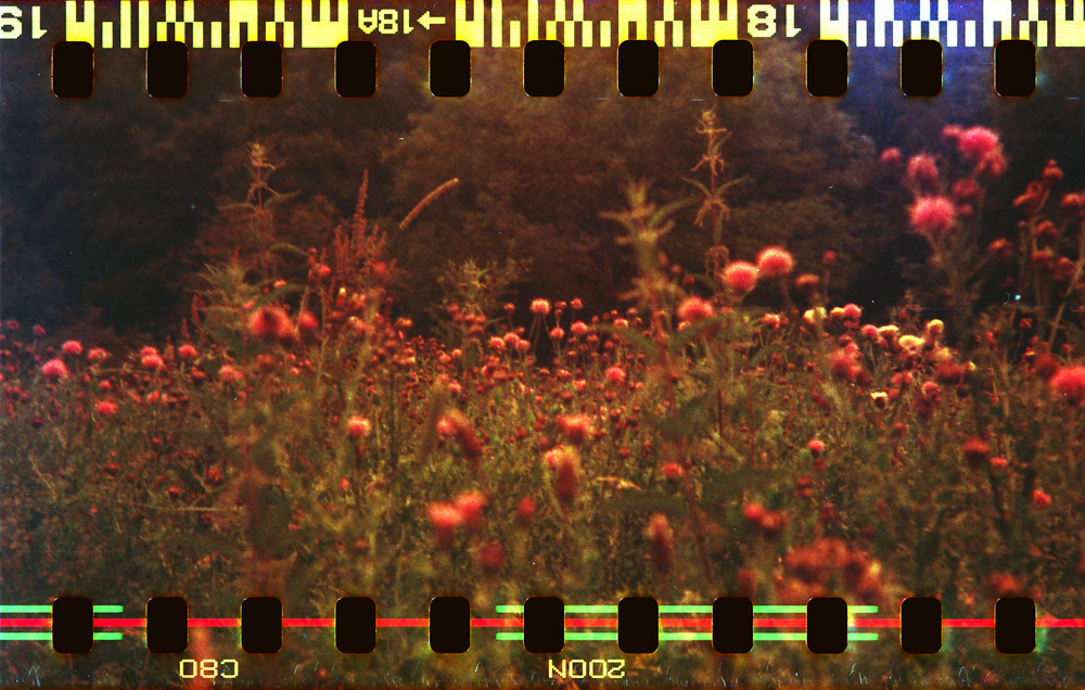 RedScale fotografie