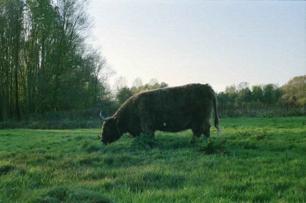 Leeuwarder bos, Canon A1, Lomo 800