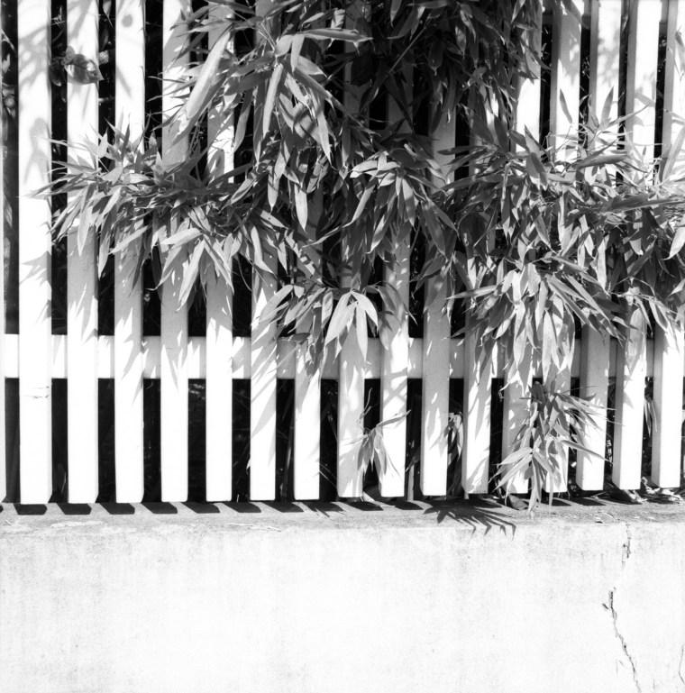hasselblad, schwarz-weiß, ilford,