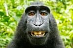 monkey-tt-width-604-height-400