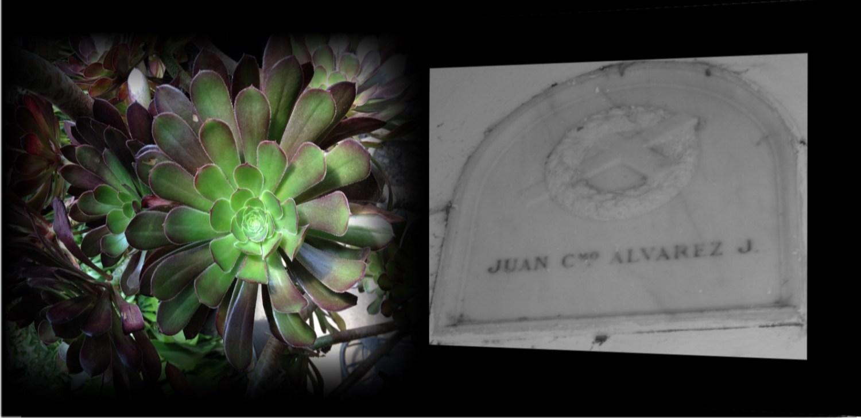 Juan C.mo Alvarez J.