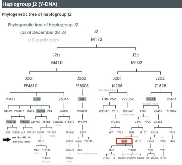 Árbol Filogenético Haplogrupo J-M172.