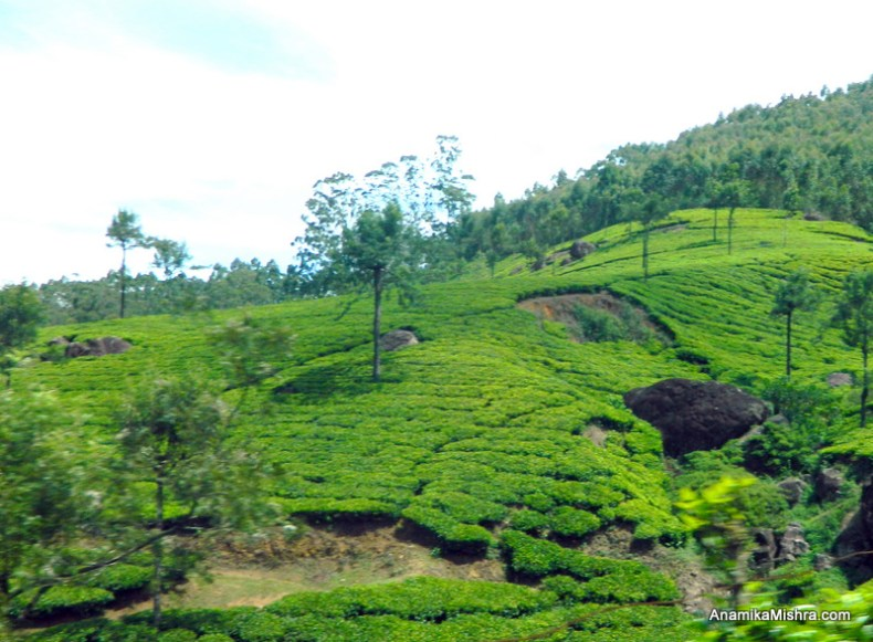 Best Places To Visit In Munnar, Kerala + Photos From My Tour