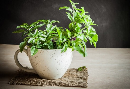 Plants You Must Have In Your Balcony