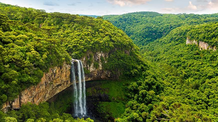 غابات الامازون المطيرة الرائعة