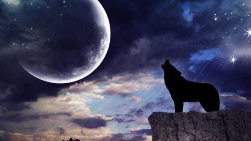ما هو قمر الذئب