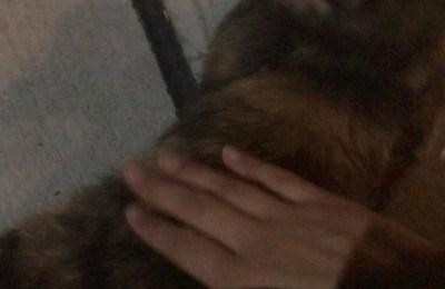 新橋キャバクラ【an_an(アンアン)】100%現役女子大生ラウンジ まりな 飼っている猫