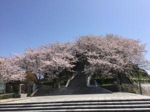 牛歧城趾公園の桜