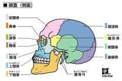顎関節症|症例14歳女性の完治した例