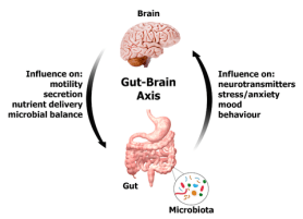 Gut-Brain_Axis