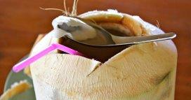 Koh-Phangan-Coconut