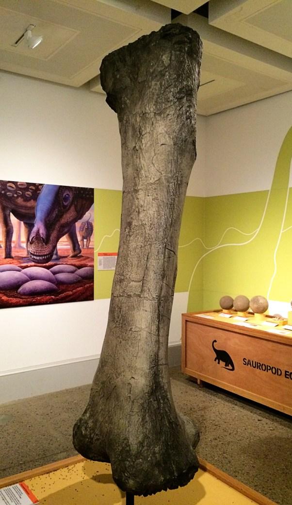 Ananyah- Hatching the Patch- Kelvingrove- Dinosaur Egg